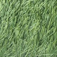 Искусственная трава 50мм